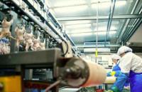Niemcy praca przy produkcji dla par bez znajomości języka i bez doświadczenia