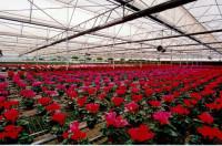 Aktualne ogłoszenie: Niemcy praca w szklarni Berlin przy zbiorze roślin