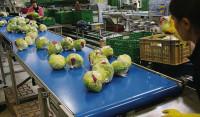 Od zaraz praca w Niemczech Heinberg w przetwórni owoców na produkcji