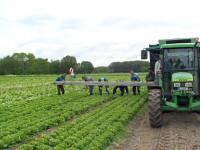 Sezonowa praca w Niemczech 2014 przy warzywach bez języka Dortmund