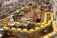 Od zaraz praca Niemcy na linii produkcyjnej w fabryce serów Norymberga