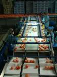 Aktualna praca w Niemczech na produkcji przy sortowaniu warzyw Berlin