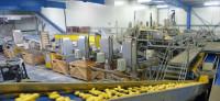 Praca w Niemczech na produkcji przy warzywach dla kobiet od zaraz Würzburg
