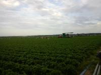 Niemcy praca sezonowa przy zbiorach truskawek bez języka Schleswig-Holstein