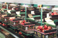 Praca w Niemczech dla par na produkcji krojenie owoców bez języka Monachium