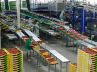 Dortmund praca Niemcy od zaraz pakowanie warzyw i owoców bez języka w przetwórni