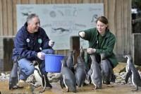 Dam sezonową pracę w Niemczech od zaraz w zoo dla studentów Rostock