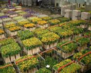 Dam sezonową pracę w Niemczech bez języka od zaraz dla pary przy kwiatach i zbiorach