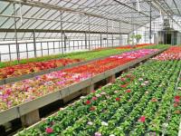 Sezonowa praca w Niemczech przy zbiorach kwiatów bez języka na wakacje