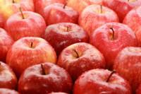 Oferta pracy w Niemczech przy zbiorach jabłek bez języka od zaraz Dortmund