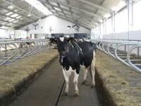 Rolnictwo sezonowa praca Niemcy – pracownik gospodarstwa rolnego Tangstedt