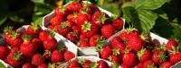 Rekrutacja 2015 sezonowa praca w Niemczech przy zbiorach owoców i warzyw