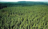 Sezonowa praca w Niemczech od zaraz w leśnictwie-ścinanie drzewek Erfurt