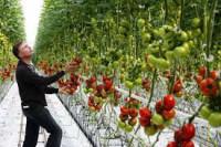 Dam pracę w Niemczech w Dortmundzie przy zbiorach warzyw bez języka