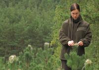 Ogrodnictwo dam sezonową pracę w Niemczech w szkółkach Bad Hersfeld