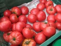 Od zaraz dam sezonową pracę w Niemczech bez języka zbiory warzyw Löbau