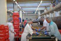 Produkcja cukiernicza oferta pracy w Niemczech bez znajomości języka Berlin pilne!