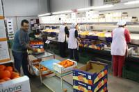 Oferta pracy w Niemczech dla par bez języka – pakowanie i sortowanie owoców Bremen