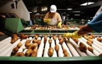 Oferta fizycznej pracy w Niemczech sortowanie i pakowanie warzyw Borken