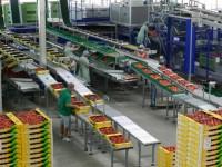 Oferta pracy w Niemczech 2015 dla par bez języka pakowanie owoców Kolonia