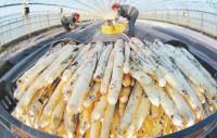 Sezonowa praca w Niemczech Fellbach przy zbiorach szparagów od marca 2015