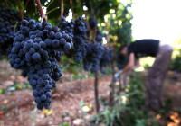Niemcy praca sezonowa dla par przy winogronach bez języka Norymberga