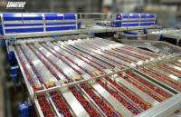 Praca w Niemczech od zaraz przy sortowaniu truskawek Schleswig-Holstein