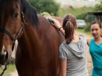 Oferta fizycznej pracy w Niemczech przy koniach w Frechen