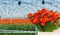 Sezonowa praca Niemcy bez języka od zaraz przy kwiatach Bremen ogrodnictwo