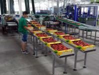 Od zaraz fizyczna praca w Niemczech bez języka sortowanie warzyw Monachium