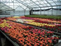 Bez języka sezonowa praca w Niemczech przy kwiatach w ogrodnictwie Bawaria