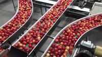 Bez języka praca w Niemczech od marca 2015 przy pakowaniu owoców Bawaria