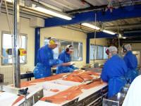 Niemcy praca dla Polaków na linii produkcyjnej w przetwórni ryb Bremerhaven