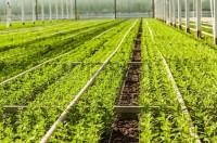 Niemcy praca sezonowa w ogrodnictwie przy roślinach ozdobnych od maja 2015