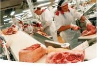 Rzeźnik – wykrawacz Niemcy praca przy produkcji mięsnej w okolicy Bielefeld