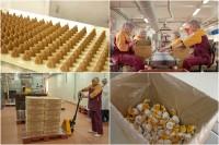 Oferta pracy w Niemczech bez znajomości języka Bielefeld pakowanie słodyczy