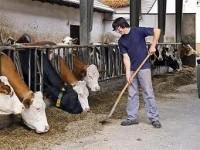 Niemcy praca sezonowa w rolnictwie jako pracownik gospodarstwa rolnego