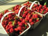 Zbiory truskawek w Heilbronn sezonowa praca w Niemczech dla par od zaraz