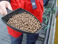 Od zaraz praca w Niemczech na produkcji karmy dla zwierząt bez języka Drezno