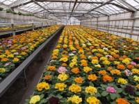 Ogrodnictwo-sezonowa praca w Niemczech przy kwiatach w szklarni od zaraz Lipsk