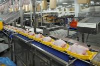 Dam pracę w Niemczech na produkcji mięsnej w Schuttorf lub Haren