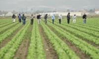 Sezonowa praca Niemcy przy zbiorach warzyw dla par bez języka Hannover