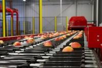 Pakowanie owoców od zaraz praca w Niemczech bez znajomości języka Frankfurt