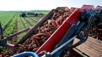 Sezonowa praca w Niemczech przy zbiorach warzyw od września 2015 Zwickau