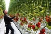 Oferta sezonowej pracy w Niemczech przy zbiorach warzyw w szklarni