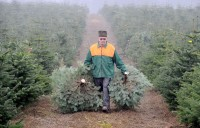 Leśnictwo dam sezonową pracę w Niemczech bez języka przy choinkach Norymberga