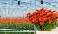 Oferta sezonowej pracy w Niemczech w ogrodnictwie przy kwiatach Berlin okolice