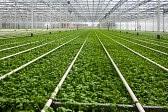 Rolnictwo od zaraz dam sezonową pracę w Niemczech bez znajomości języka Hof
