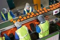 Praca w Niemczech pakowanie warzyw od zaraz bez znajomości języka Cottbus