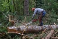 Dam sezonową pracę w Niemczech od zaraz w leśnictwie wycinka drzew dla Polaków